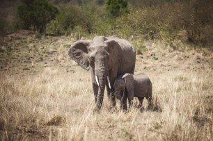 moniquedecaro-mara-bush-camp-kenia-5015