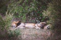 moniquedecaro-mara-bush-camp-kenia-5323