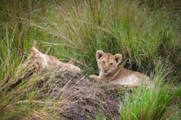 moniquedecaro-mara-bush-camp-kenia-5811