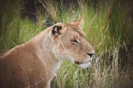 moniquedecaro-mara-bush-camp-kenia-5828