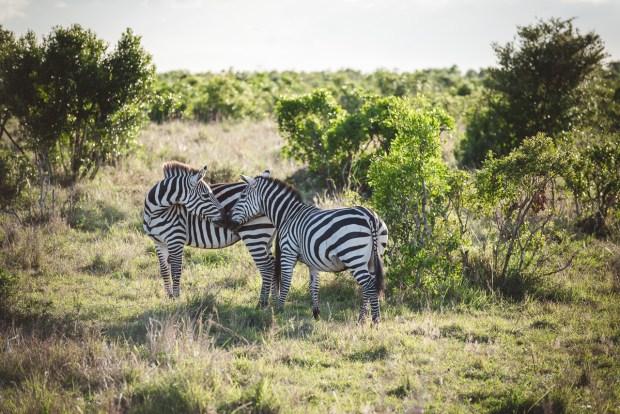 moniquedecaro-mara-bush-camp-kenia-5938