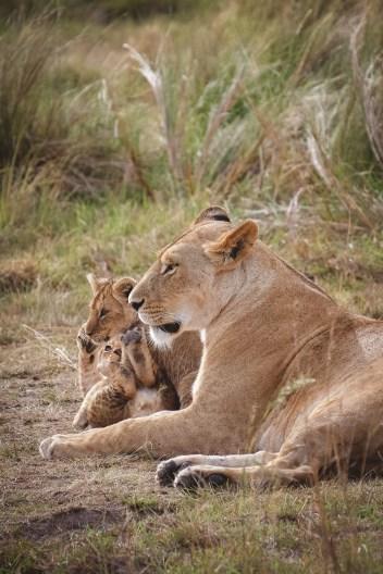 moniquedecaro-mara-bush-camp-kenia-5945