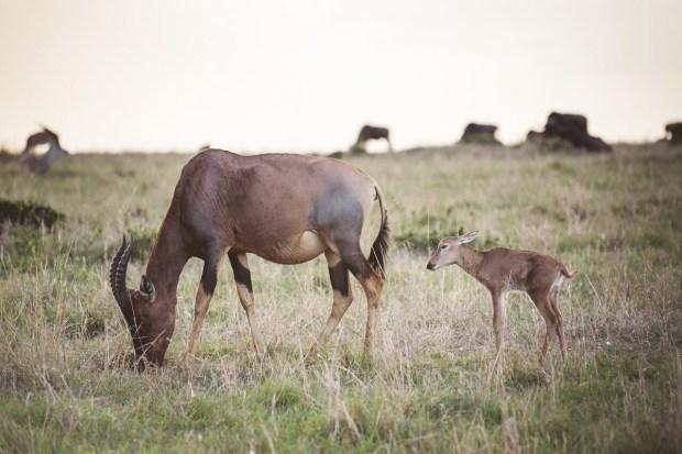 moniquedecaro-mara-bush-camp-kenia-5952