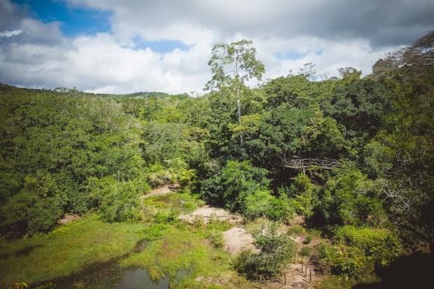 moniquedecaro-shimba-hills-7041