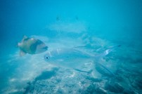 beautifulplacesforlovers-malediven-025