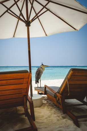 moniquedecaro_velassaru_maldives-3261