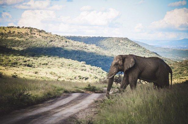 moniquedecaro-rovos-rail-südafrika-6271