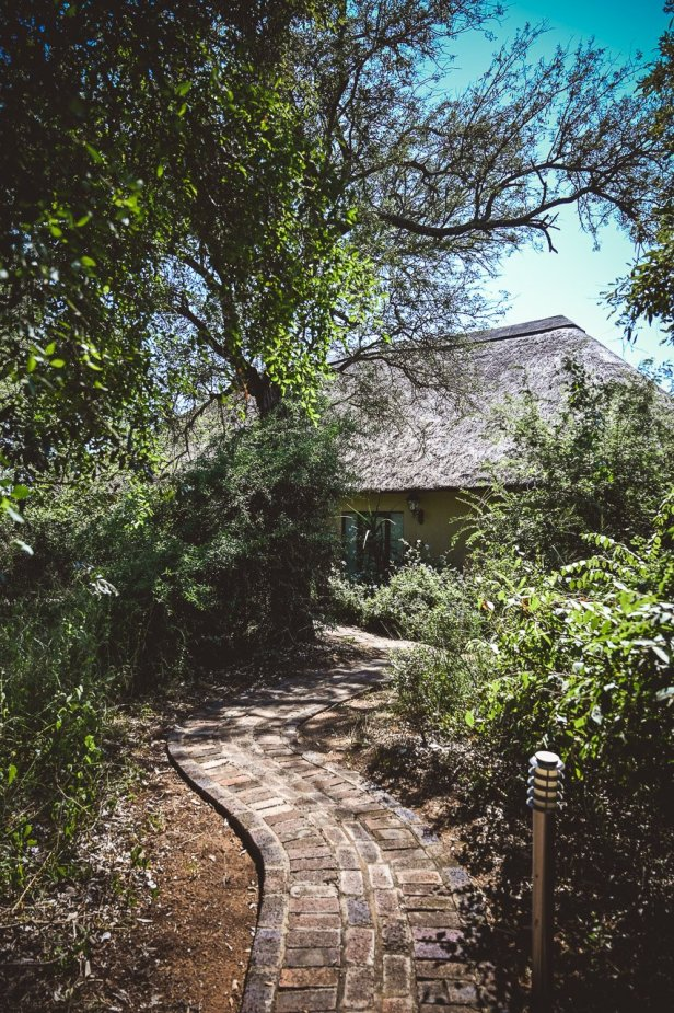 moniquedecaro-kings-camp-south-africa-4787