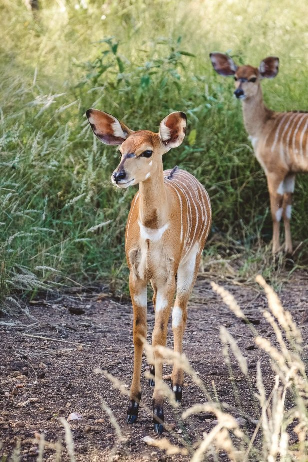 moniquedecaro-kings-camp-south-africa-5842