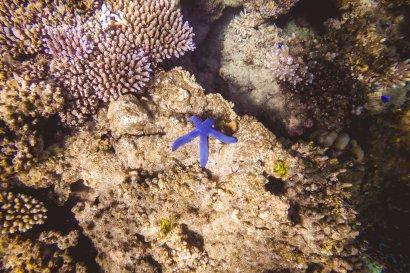 moniquedecaro-fiji-snorkel-7765