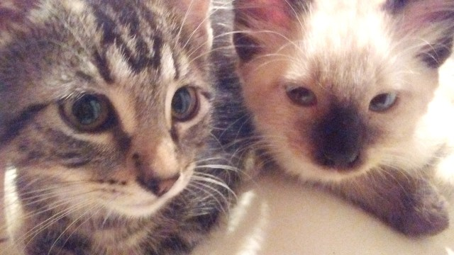 Kittens from feral litters we rescued.