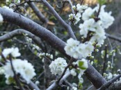 Lucchio flowers