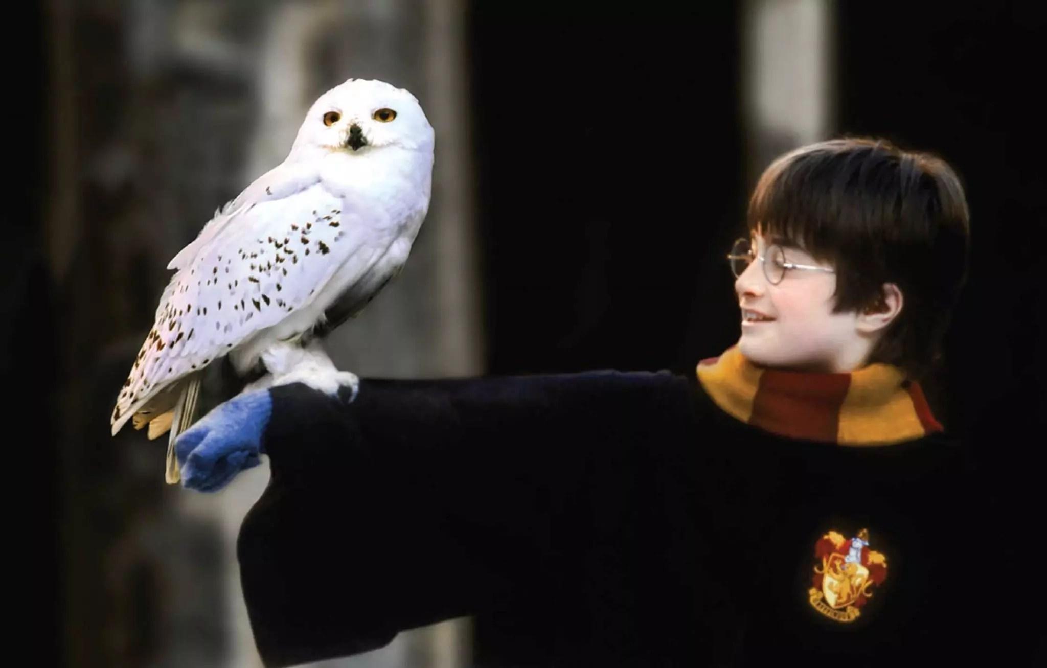 harry potter postcards owl