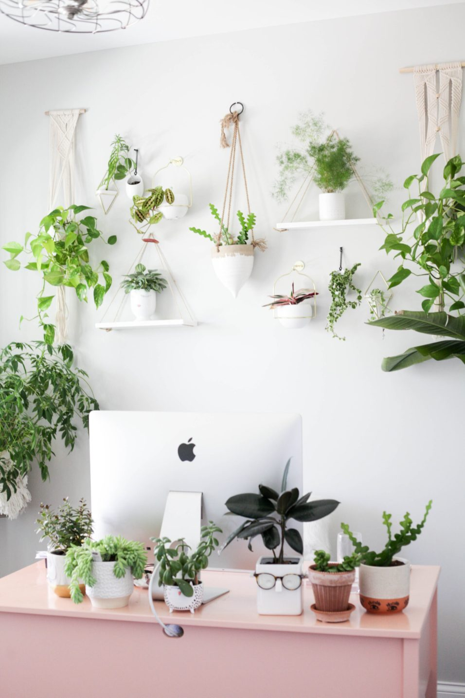 how to become a successful plant parent