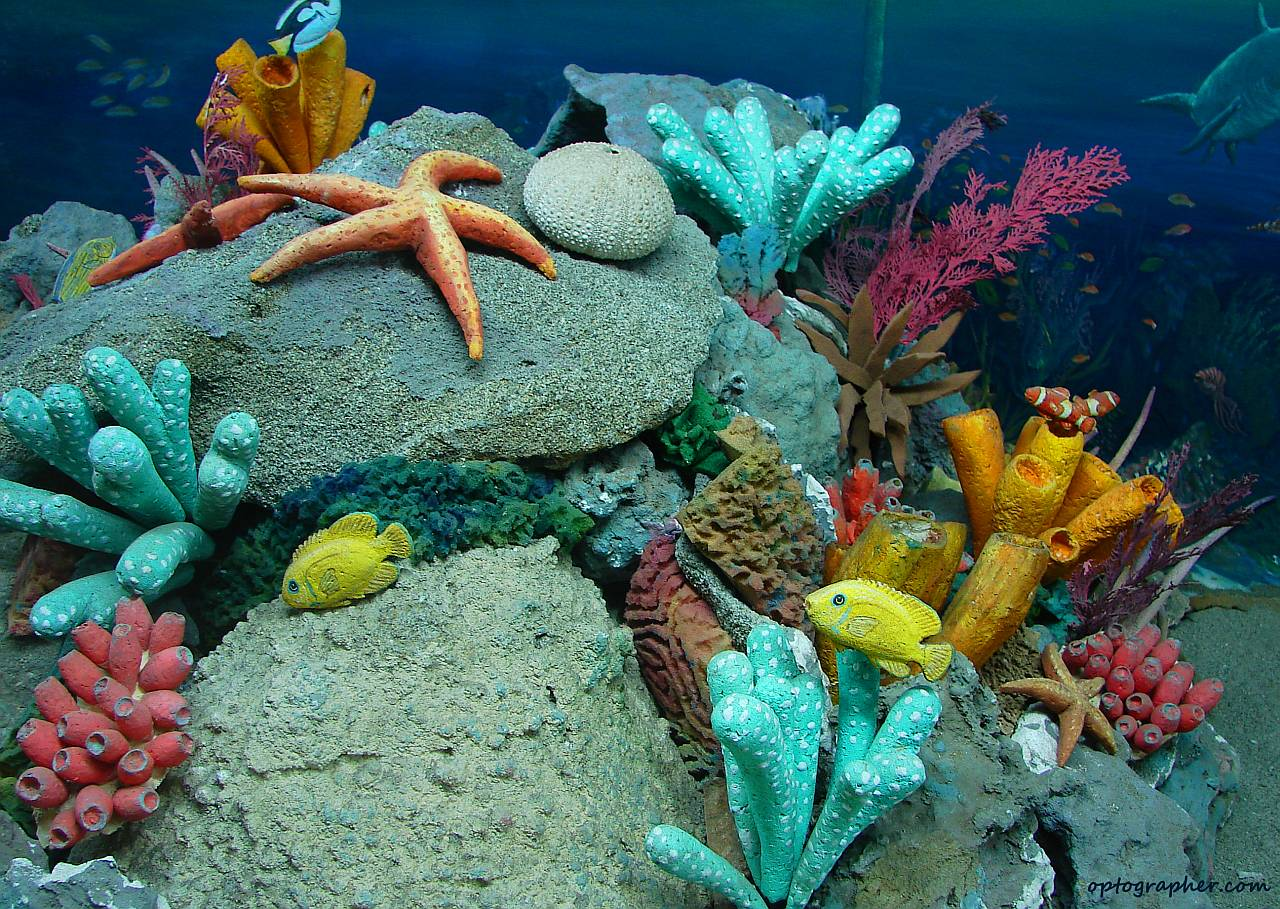 Sea Life Images