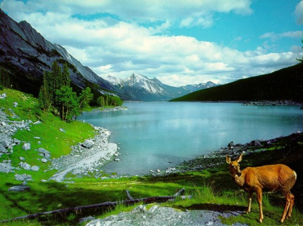 Nature Images   Beautiful Cool Wallpapers