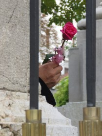 Rose in Waiting - A man sat on a bench, holding this rose while his wife went into church - Belgrade, Serbia