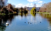 Another Shot of Swans and Buckingham Palace - Just Can't Get Enough - London, England, United Kingdom - by Anika Mikkelson - Miss Maps