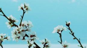 Cherry Blossoms Filter Fun - Ohrid Macedonia - by Anika Mikkelson - Miss Maps - www.MissMaps.com