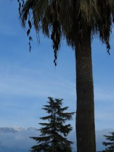 Palms and Pines - Berat Albania - by Anika Mikkelson - Miss Maps - www.MissMaps.com