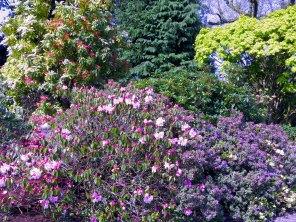 Gardens of Blarney Castle Ireland - by Anika Mikkelson - Miss Maps - www.MissMaps.com