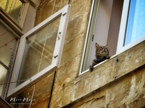 The curious cat - Malta - by Anika Mikkelson - Miss Maps - www.MissMaps.com