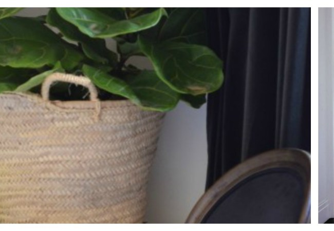 Caring for A Fiddle Leaf Fig Plant