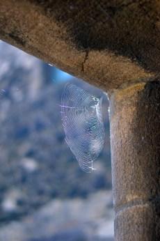 Spider web at stirling castle