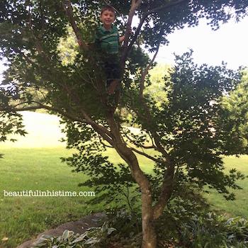 18 Tree Climbing