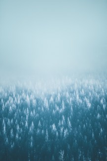 Snow Flocked Forest