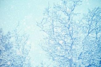 Blue Winter Trees
