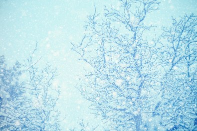 Blue Winter Trees
