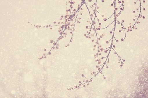 Spring Branches In Falling Snow