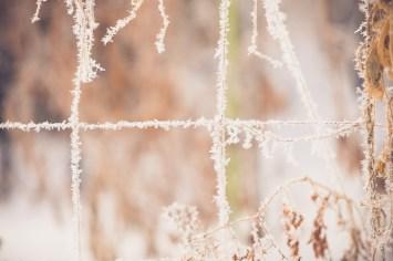 Frozen Garden Trellis