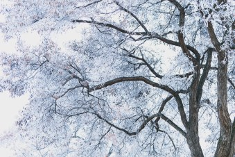 Bare Frozen Branches