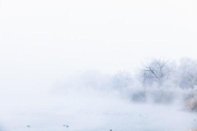 Dreamy Winter Landscape