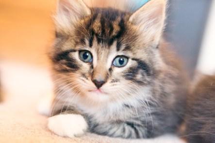 beautiful-life-gallery-cats-114