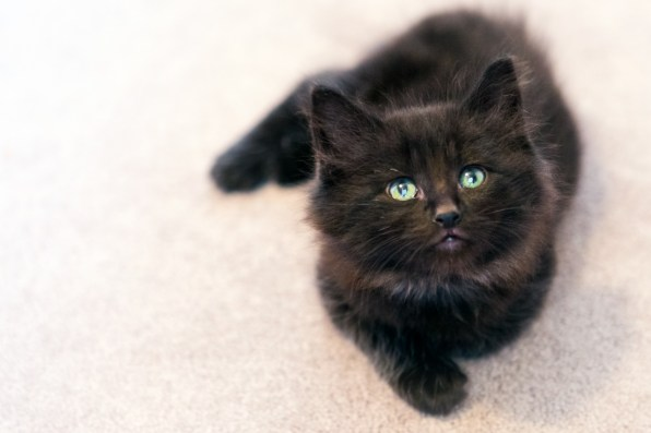 beautiful-life-gallery-cats-116
