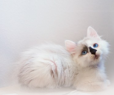 beautiful-life-gallery-cats-126