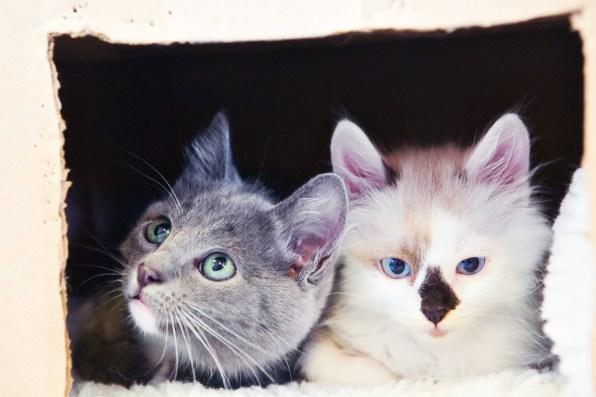 beautiful-life-gallery-cats-130