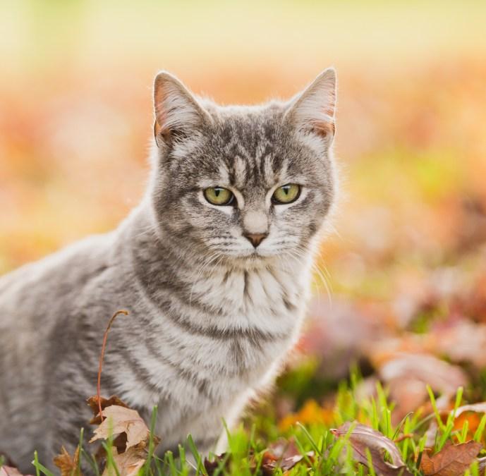 beautiful-life-gallery-cats-1356692