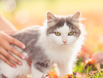 beautiful-life-gallery-cats-136