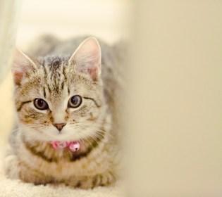 beautiful-life-gallery-cats-1378949