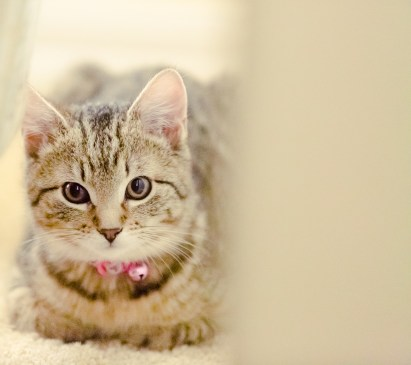 beautiful-life-gallery-cats-1378949