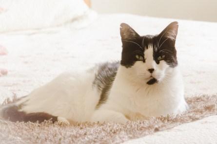 beautiful-life-gallery-cats-1398974