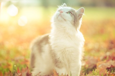 beautiful-life-gallery-cats-1446673