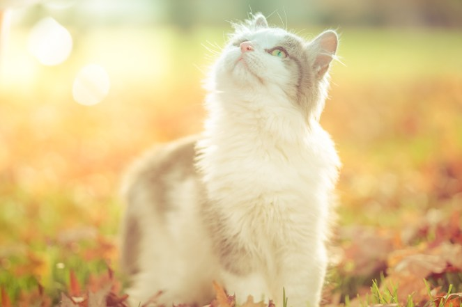 beautiful-life-gallery-cats-1446673