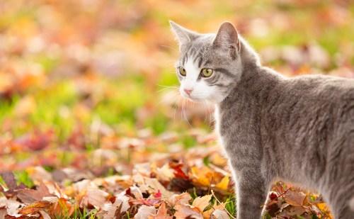 beautiful-life-gallery-cats--145