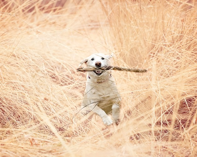 Here's your stick!