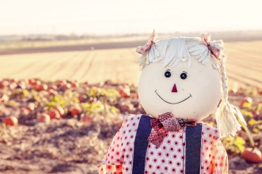A not so scary scarecrow at the edge of a pumpkin patch